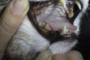 preview: Katze Plaque weiche Beläge