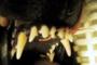 preview: Kronenfraktur Schneidezahn Hund