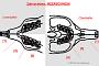 preview: Zahnschema Meerschweinchen