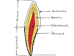 Schema Zahnaufbau