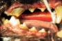 preview: Hund beginnende Parodontitis
