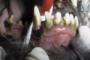 preview: Hund mobile Zähne