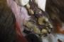 preview: Hund Zahnstein hochgradig