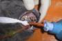 preview: Katze persistierende Milchzähne