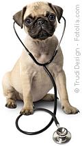 Hund mit Stetoskop